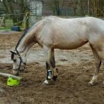 Coaching mit Pferden - Co-Trainer Minnja