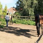 Coaching mit Pferden - eine Übung