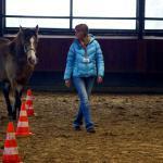 pferdegestützte Seminare - Coaching mit Pferden Harz