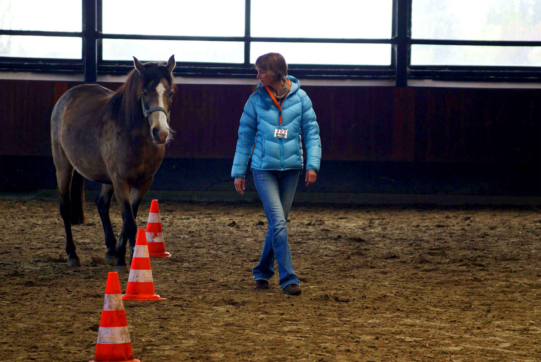 Pferdegestützte Seminare