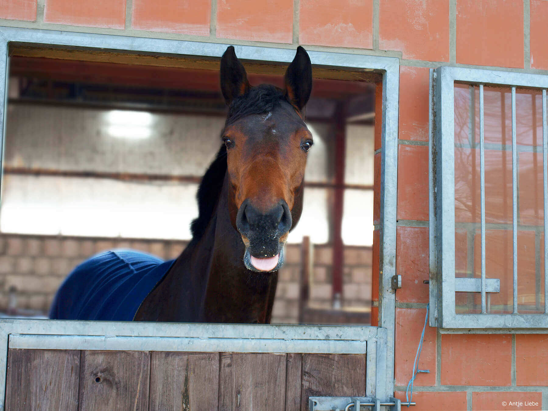 Co-Coach Galdina - Coaching mit Pferden Harz