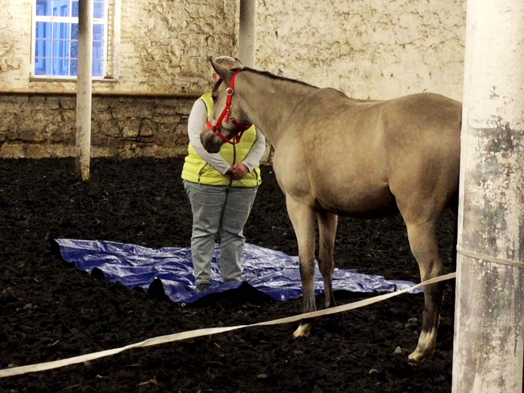 Grenzen setzen & erleben - Coaching mit Pferden Harz