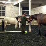Feedback geben und empfangen - Coaching mit Pferden Harz