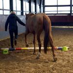 Coaching mit Pferden - Coaching mit Pferden Harz