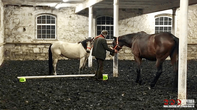 Einzelcoaching - Angebote | Coaching mit Pferden Harz
