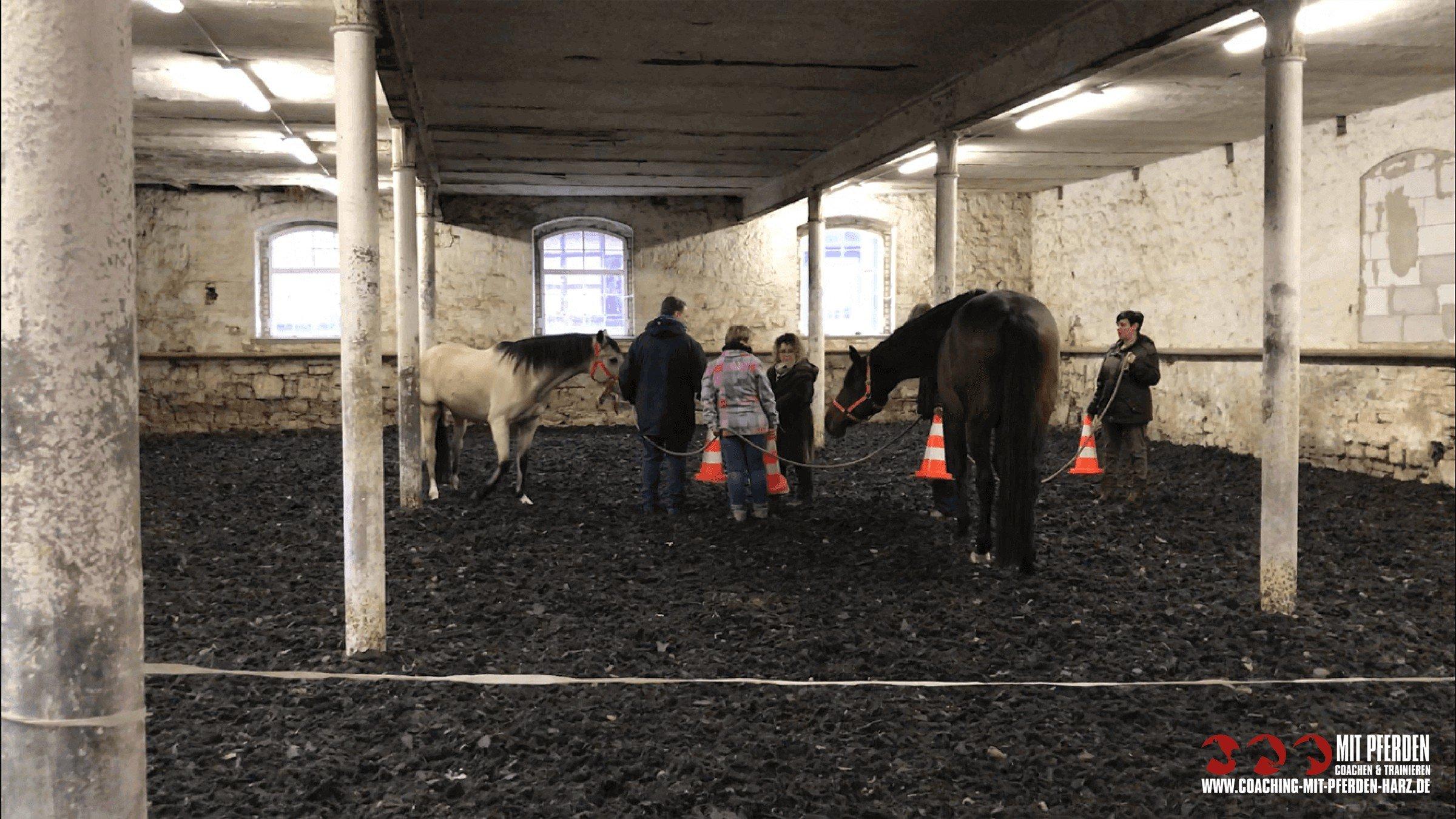 Gruppencoaching - Angebote | Coaching mit Pferden Harz