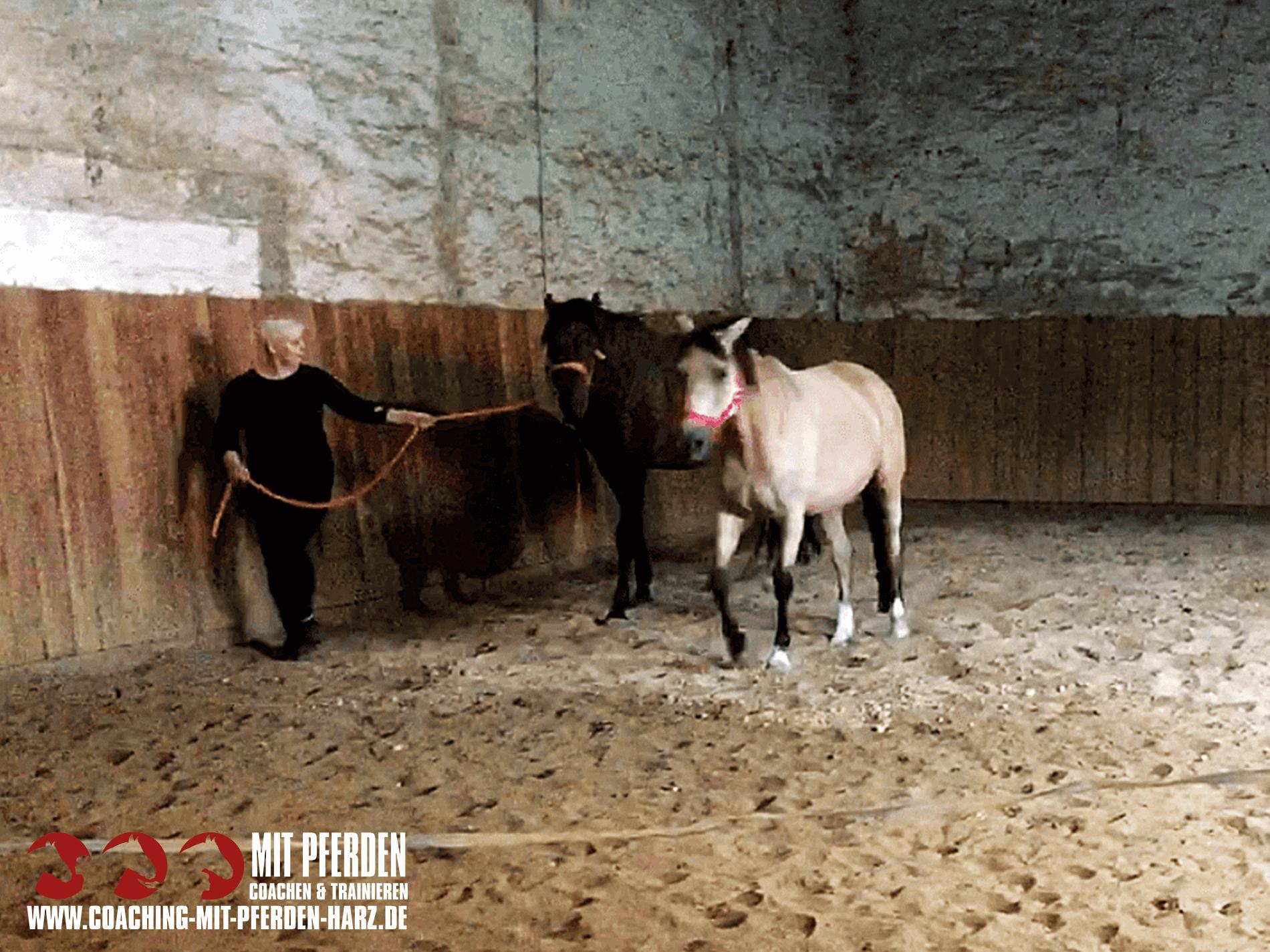 erfolgreich kommunizieren | Coaching mit Pferden Harz