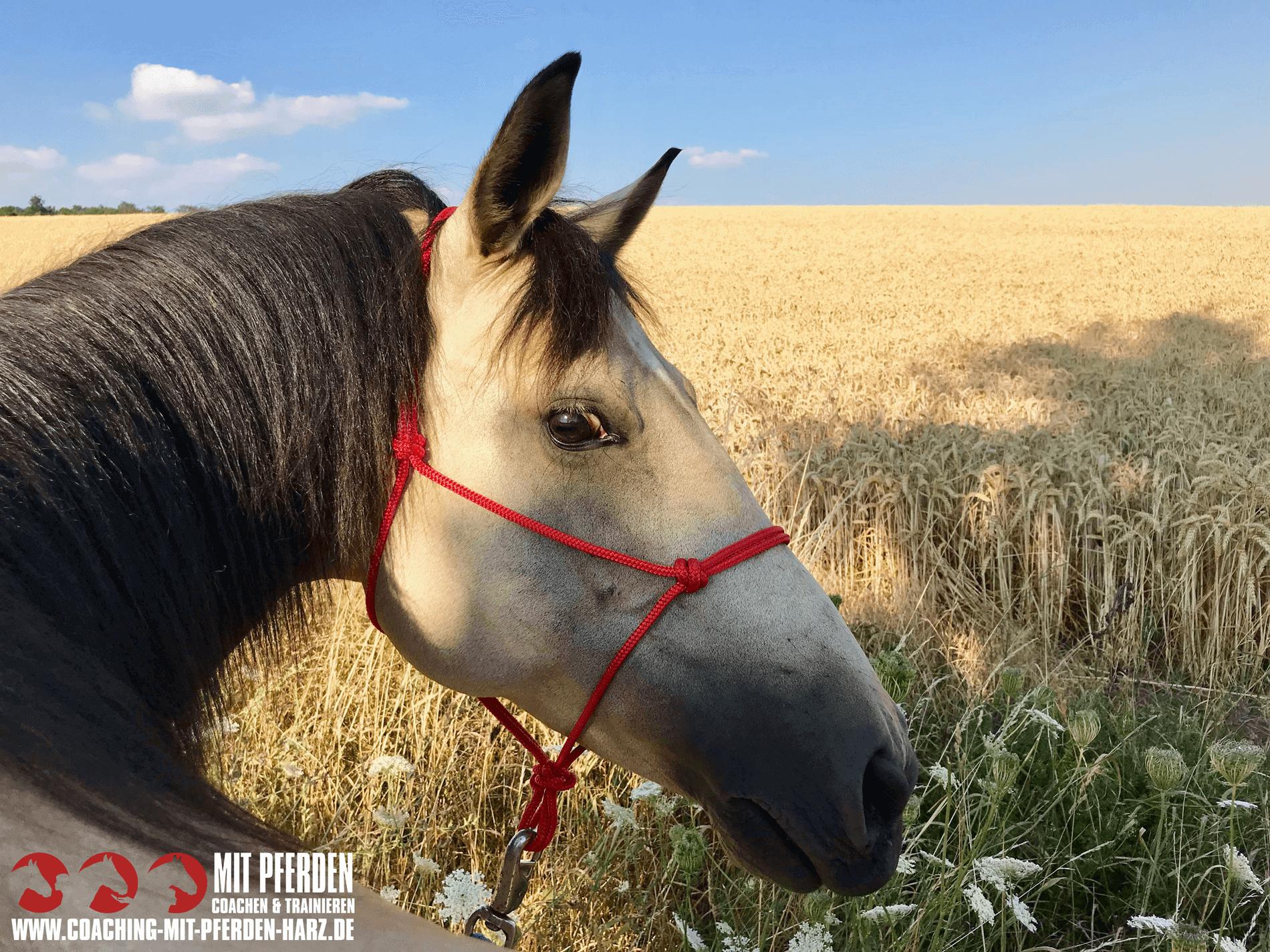Führung (neu) erleben | Coaching mit Pferden Harz