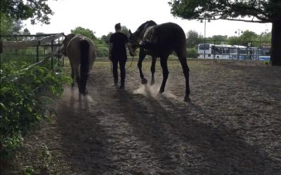 Seminare mit Pferden