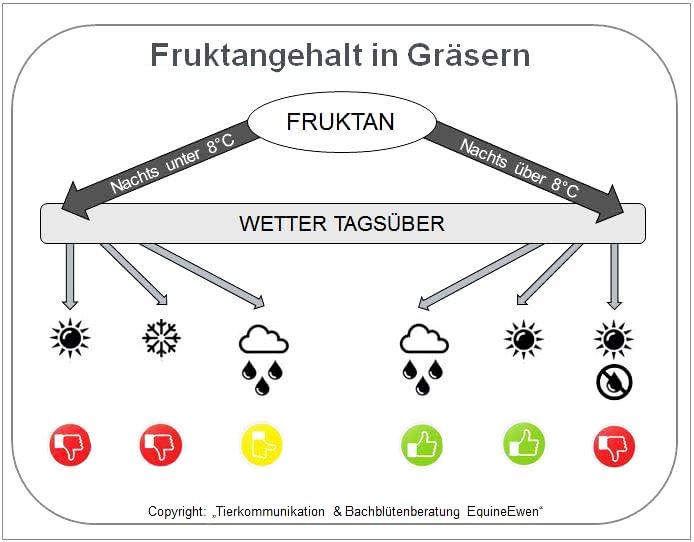 Hufrehe Auslöser- Fructangehalt in Gräsern - Grafik Tierkommunikation & Bachblütenberatung EquineEwen